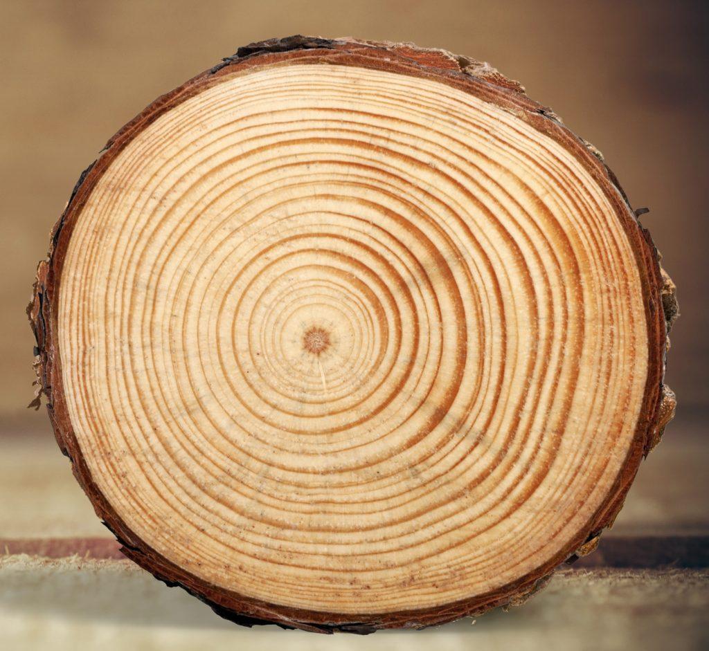 Tree Rings Log Wood Tree Trunk Tree Pine Timber