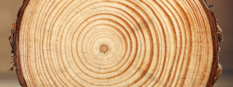 Tree Rings Log Wood Tree Trunk Tree Pine Timber